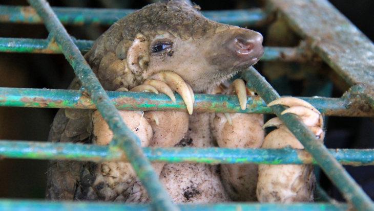 Het coronavirus en de handel in wilde dieren