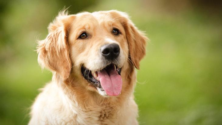 Hondenhotel vangt honden van coronapatiënten gratis op