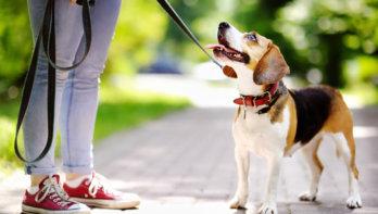 GAIA opent corona hotline voor Vlaamse huisdierbaasjes