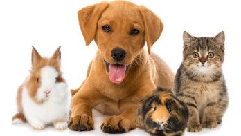 Wat je als huisdierbaasje moet weten over COVID-19