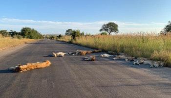leeuwen Kruger Park