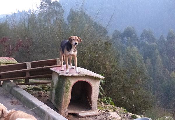 Hondenopvang in de bergen van Noord-Portugal