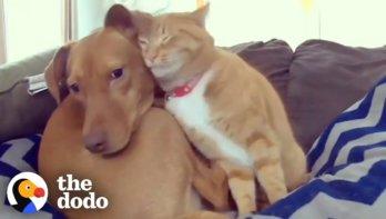 Kat houdt hond gezelschap als eigenaar weg is