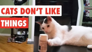 Katten die niet van dingen houden