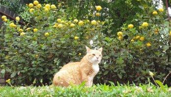 Katten verkennen de tuin
