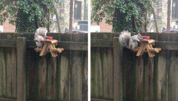Picknicktafel voor eekhoorns