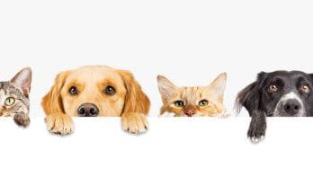 Shenzen verbiedt het eten van honden en katten