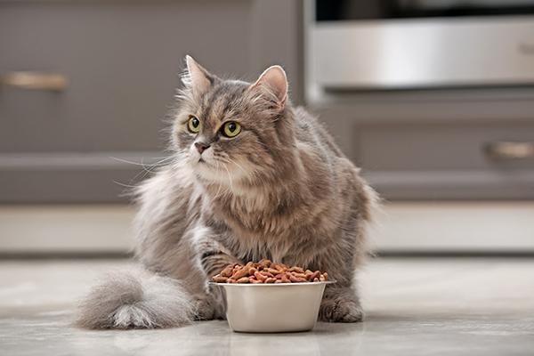 Bah, dat lust ik niet! 8 tips voor kieskeurige katten
