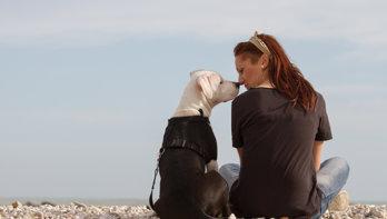 Door corona gedupeerde huisdieren vinden oppas