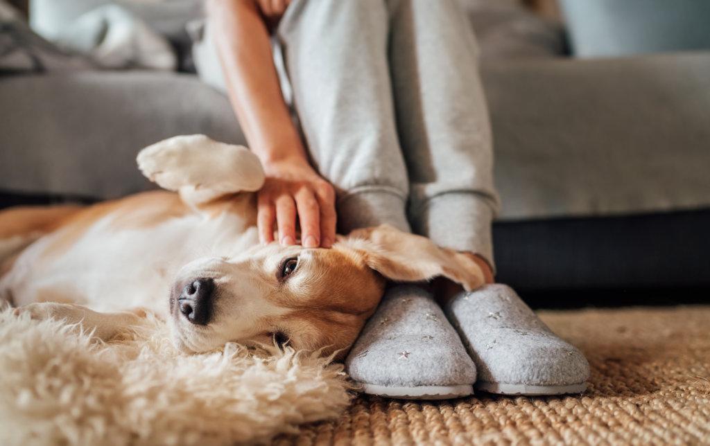 hond immuun massage relax