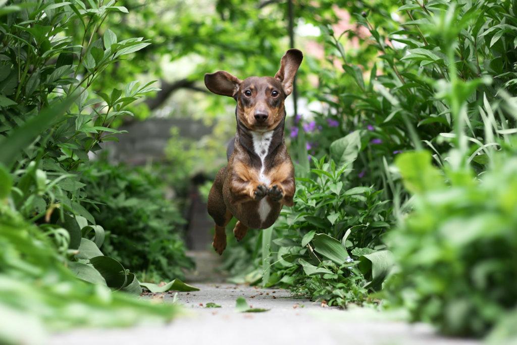 hondvriendelijke tuin: paden
