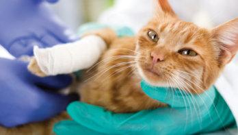 Wonden bij katten behandelen