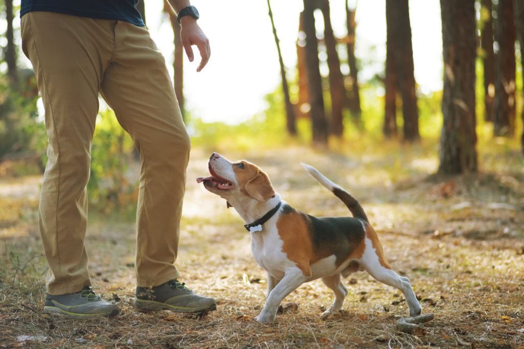 hond loslopen beloning
