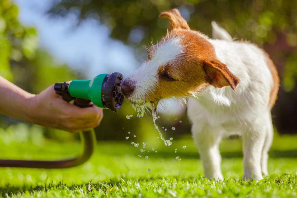 hondvriendelijke tuin: drinkwater