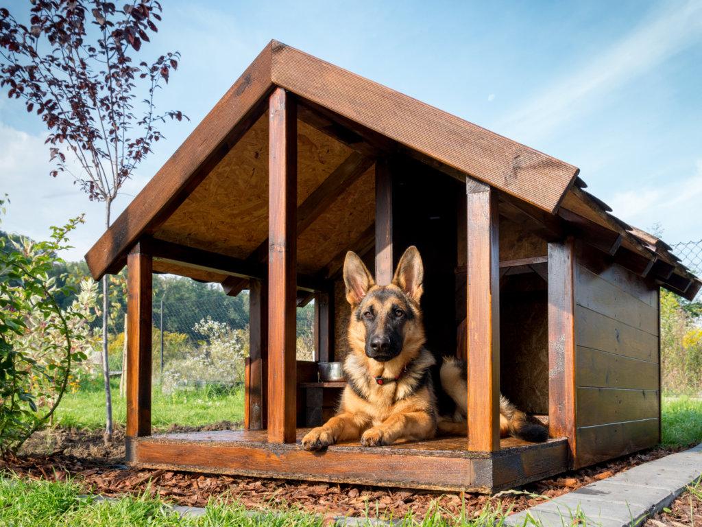 hondvriendelijke tuin: rustplek