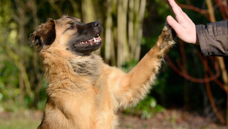 Ook honden ervaren nu stress