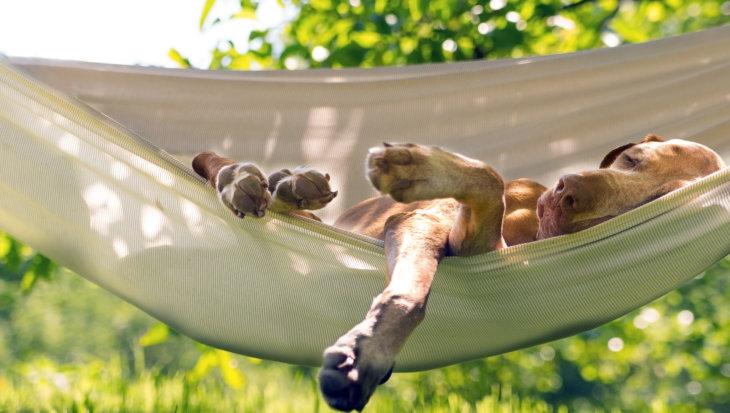 Tips voor hondvriendelijke tuin