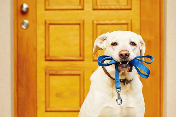 Hond is geen tijdelijk middel tegen verveling