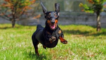 hond loslopen leren tip