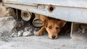 Huisdieren gedumpt in Midden-Oosten uit onterechte angst voor corona
