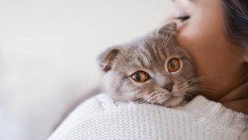 Test katten gevoeligheid corona