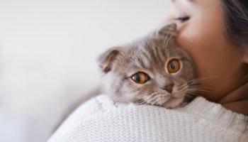 corona katten testen zorgmedewerkers