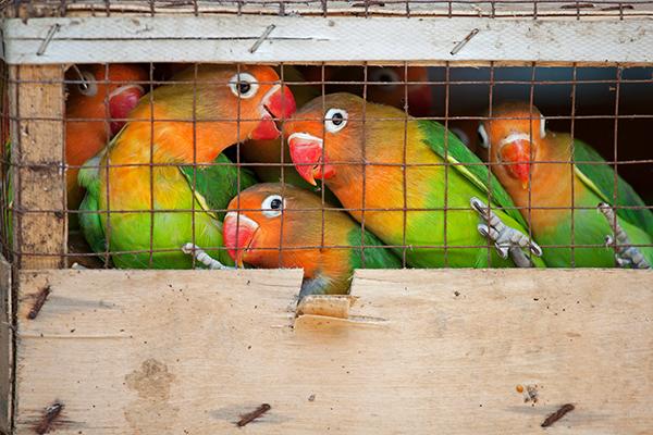 Oproep aan WHO: Beperk de wereldwijde handel in wilde dieren!
