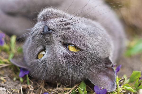 allergie kat niezen stof prikkels