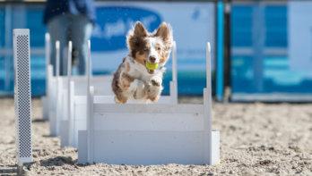 Animal Event geannuleerd, online-versie in voorbereiding