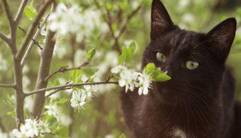 allergie kat hooikoorts niezen