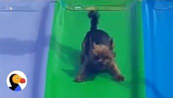Hond is dol op glijbaan