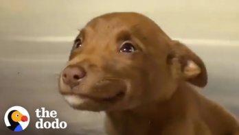 Lachende pup krijgt forever home
