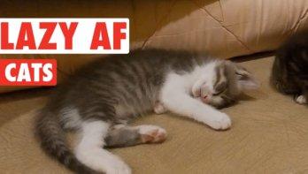 Lazy catzzzzzzz