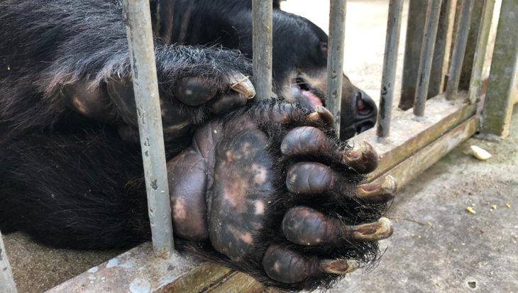 Stop wilde dieren te zien als product