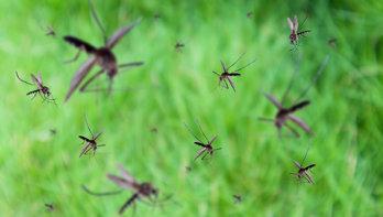 Muggen zijn er vroeg bij dit jaar