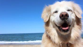 Zomertips voor hondenbaasjes