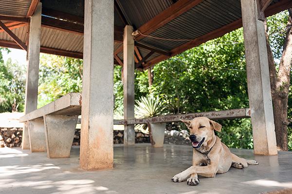 hond zomertips