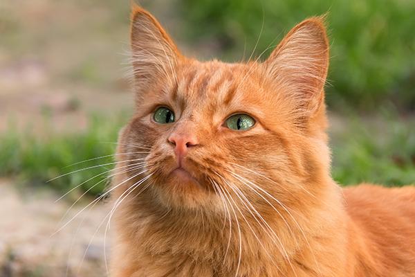 allergie kat planten hooikoorts stof
