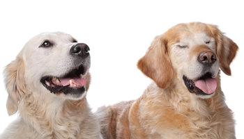 blind huisdier