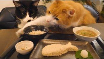 Sushi voor katten
