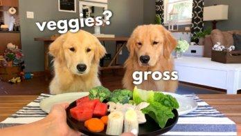 Tucker en zijn vriendin testen eten