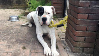 Ter adoptie: Witte