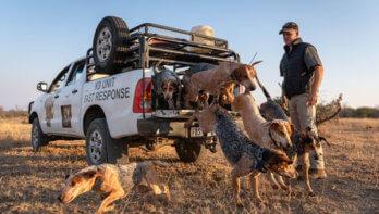 Honden redden neushoorns