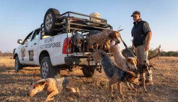 honden beschermen wildlife