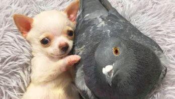 Bijzondere vriendschap