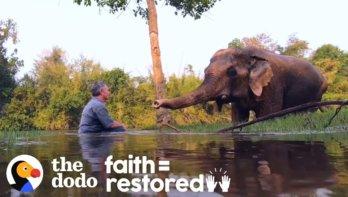 Geredde olifant luister graag naar pianomuziek