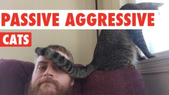 Katten: passief-agressief