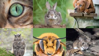 Zo zien dieren de wereld