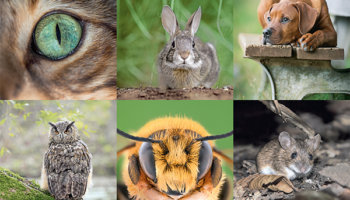 ogen dieren