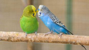 Laat je vogel niet vereenzamen
